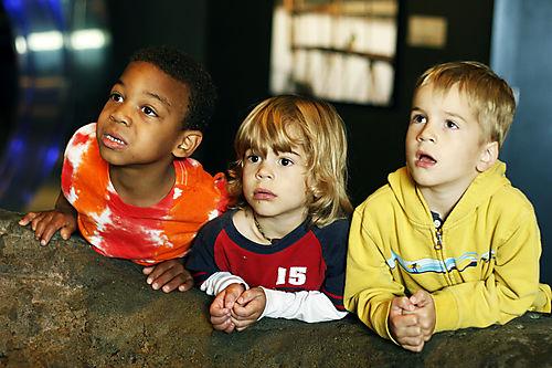 Three boys aquarium