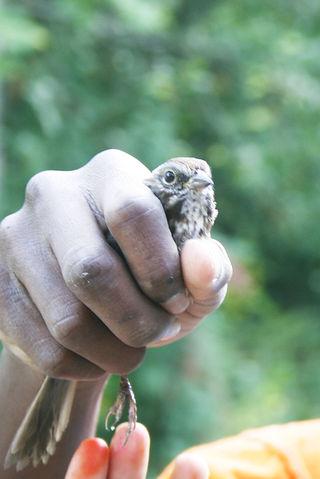 Close up bird