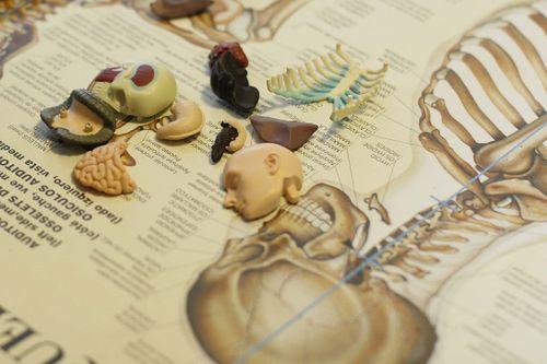 Adalia-anatomy 2 copy